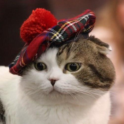 Аватарка котик, бесплатные фото, обои ...: pictures11.ru/avatarka-kotik.html