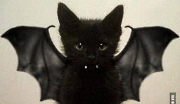 Vampire Cat s